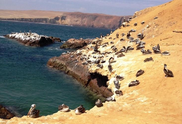 Paracas: Islas Ballestas e Reserva Nacional