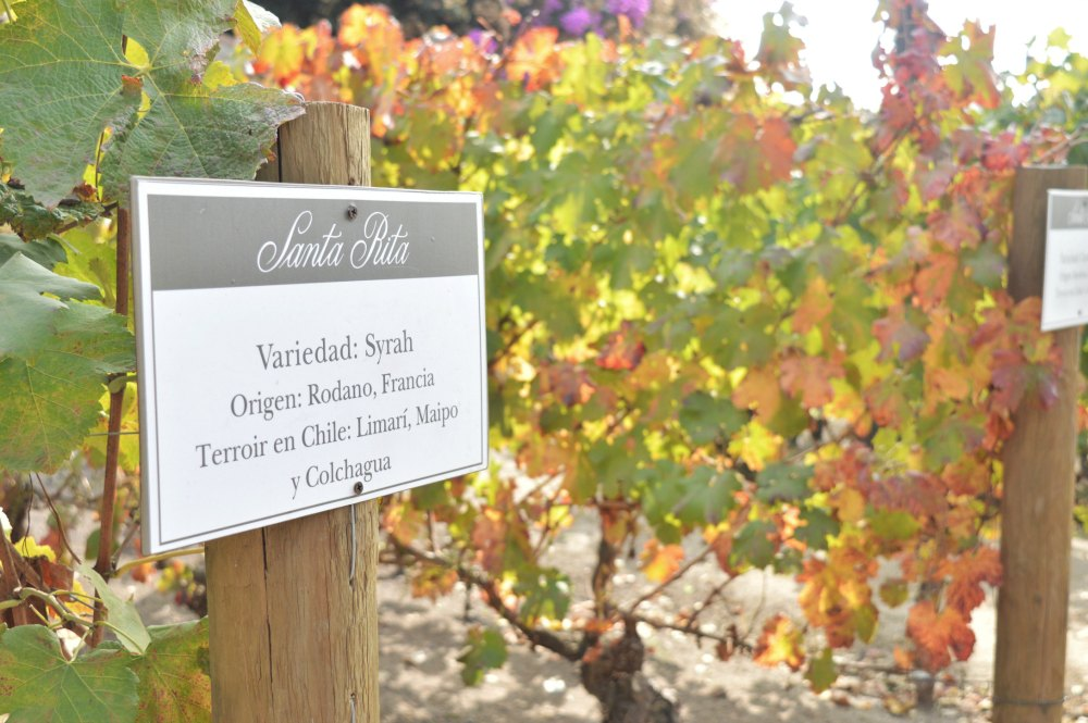 Vinícola Santa Rita: uma visita surpreendente!